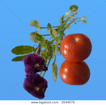 Tomato And Viola On A Mirror
