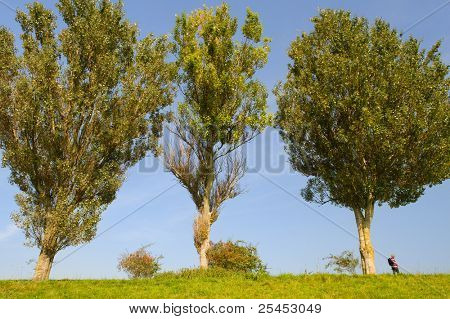 Man is hiking in landscape with very big trees
