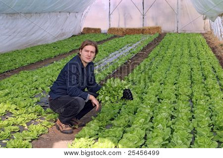 Greenhouse Vegetable Grower