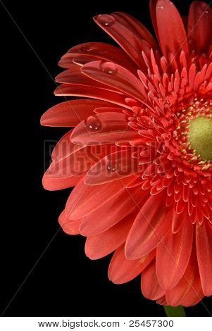 Spring Time Red Flower With Water Drops Background
