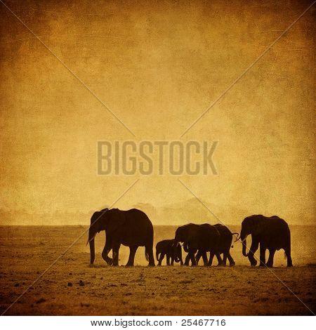 Elephant's Family