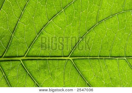 Leaf Detail 5.