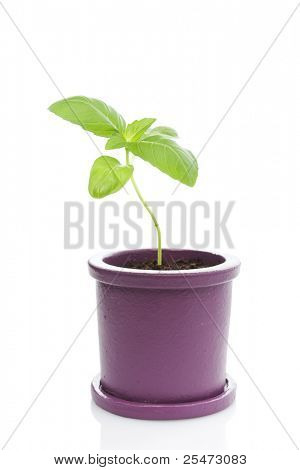 A potted plant just beginning to grow.