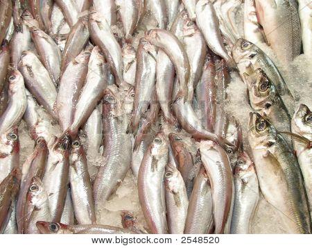 Grupo de peces en el hielo