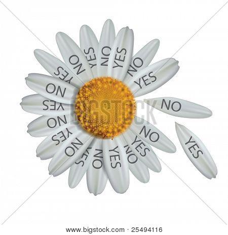 Vector divine  decision daisy