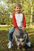 stock photo of pot-bellied  - A preschool boy in his yard riding on the back of his pet pot - JPG