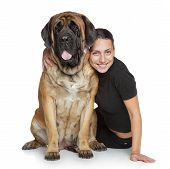 image of english-mastiff  - Beautiful woman and English Mastiff dog on white background - JPG