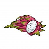 Dragon Fruit. Half An Dragon Fruit. Fruit Crop. Exotic Fruit. Illustration. Isolated On White Backgr poster