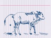 picture of zebu  - Hand drawing zebu cow in action - JPG