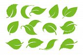 Leaves Icon Vector Set Isolated On White Background. Various Shapes Of Green Leaves Of Trees And Pla poster
