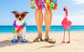 Dog And Owner Sitting Close Together At The Beach On Summer Vacation Holidays, Close To The Ocean Sh poster