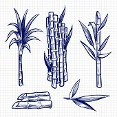 Hand Drawn Sugar Cane Set Vector Illustration. Cane Plant, Sugar Ingredient Stem, Sugarcane Harvest  poster