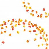 Maple Leaves Vector Background, Autumn Foliage On White Illustration. Canadian Symbol Maple Red Yell poster