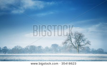 tree on a cold blue winter morning