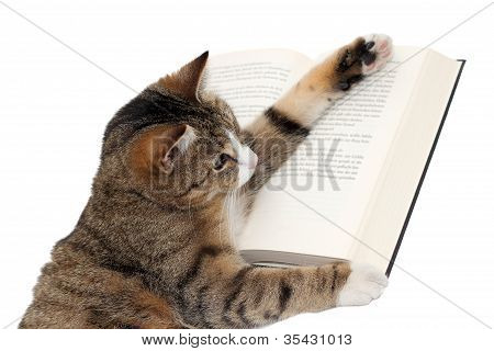 Cute Little Cat Reading A Book