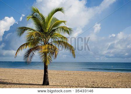 Beach Resort In San Juan (puerto Rico)