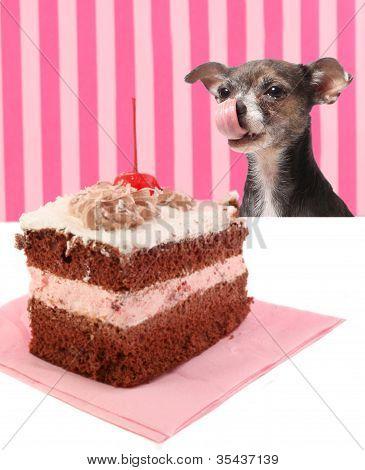 Dog Staring At Cherry Chocolate Cake