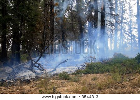 Fire Starting On The Edge Of Forest