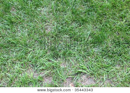 Grass Patch
