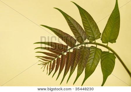 Frond Detail On A Yellow Background
