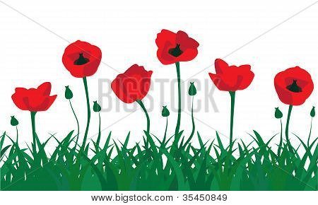 seamless pattern of red poppies