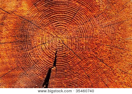 slice of dry wood timber natural background