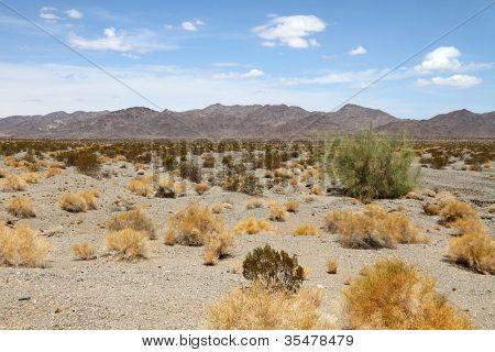 Desert landscape (Mojave desert)