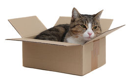 foto of snoopy  - snoopy cat in removal box on white - JPG