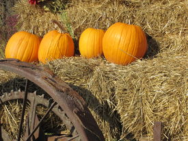 image of hayride  - Four pumpkins in a row on straw bales ready for a hayride - JPG