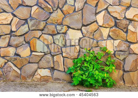 Celandine Plant And Stone Wall