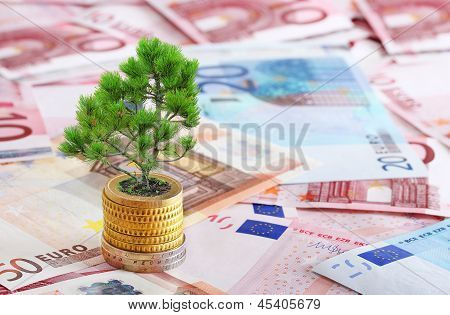 Pine Tree Growing From Pile Of Coins