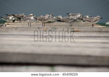 Seagulls with ruins of port Cayo Blanco, Cuba