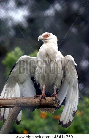 beautiful hawk, animal nature photo