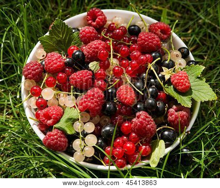 Fresh berries in bowl under sunlight