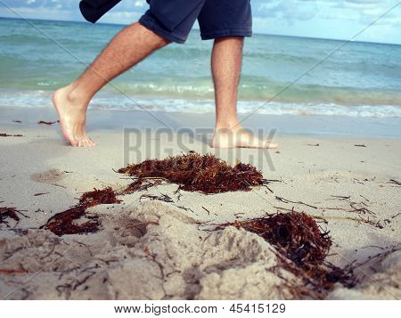 Seaweed On Beach At South Beach