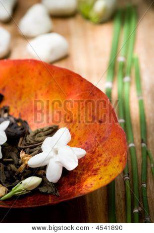 Jasmine Tea - Ornamental