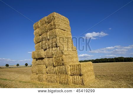 Briquettes of dry hay in a field in the north of France