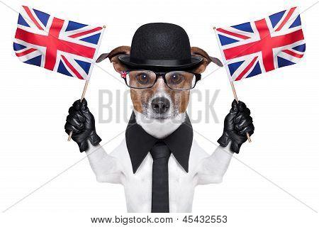 British Dog