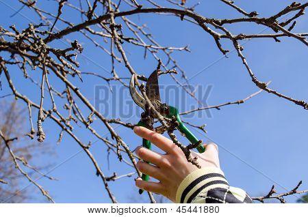 Hand Cut Fruit Tree Twig Clipper Spring Garden