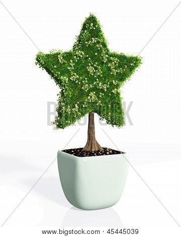 A Plant Shaped Like A Star