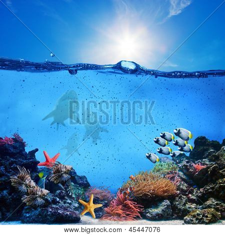 Underwater scene. Coral reef, colorful fish groups, sharks and sunny sky shining through clean ocean water. High res