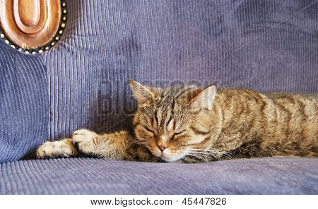 Katze-Träume