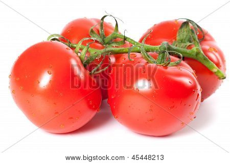 Bunch Of Ripe Tomato With Water Drops