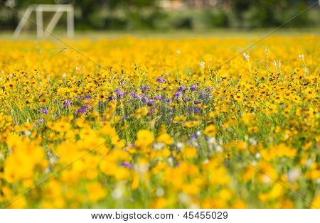 Wildflowers In Front Of A Texas Soccer Field