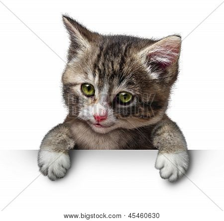 Cat Kitten Blank Sign