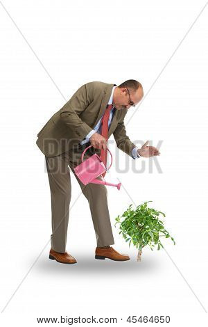 The Businessman Pours Green Tree