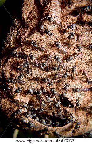 Wasp nest colony