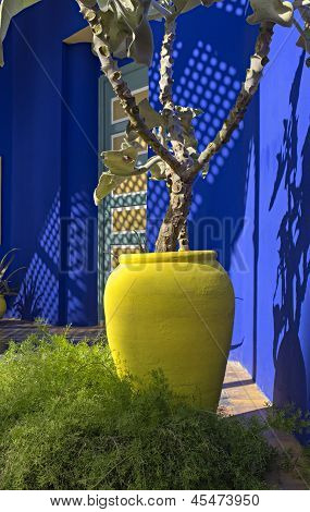 Yellow Pot Against Electric Blue Wall