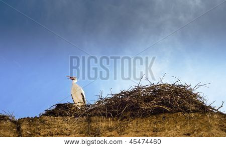 Stork Waits Beside Nest on Ancient Wall in Marrakesh