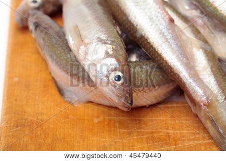 Fresh Smelts Fish